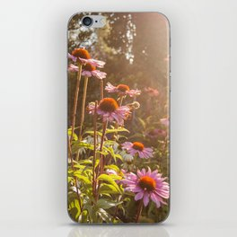 Sun setting on purple coneflower garden with bee on flower iPhone Skin