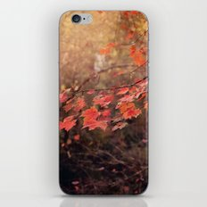 Autumn Leaves of Red iPhone & iPod Skin