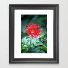 Red Hot Daisy Framed Art Print