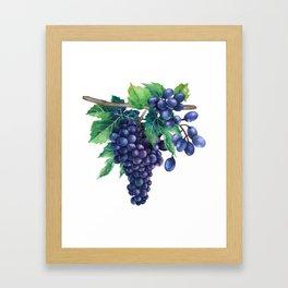 Watrercolor grapes Framed Art Print