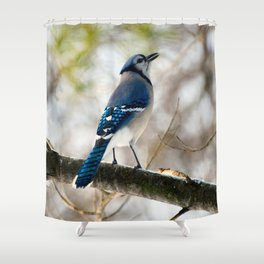 Blue Jay Calling Shower Curtain