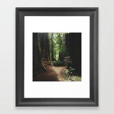 Redwood Trail Framed Art Print