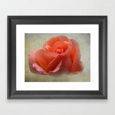 Romantic Peachy Rose Floral Framed Art Print