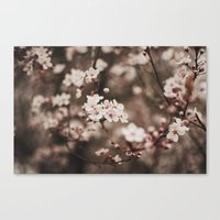 cherry blossom Canvas Prints featuring Cherry Blossom by Evan Dalen