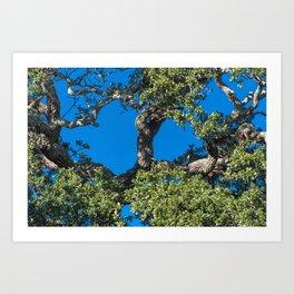 Magnificent Oak Art Print