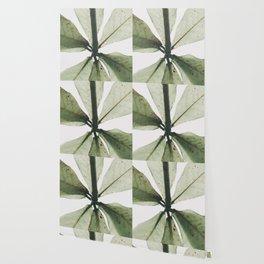 Natural Background 90 Wallpaper