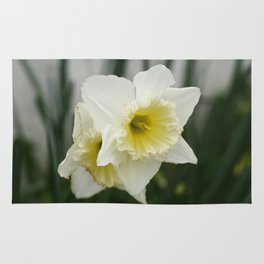 White and yellow daffodils, early spring flowers Rug