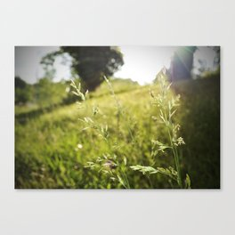 invincible. Canvas Print