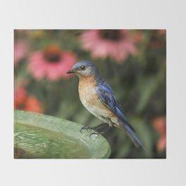 Perched Eastern  BlueBird Throw Blanket