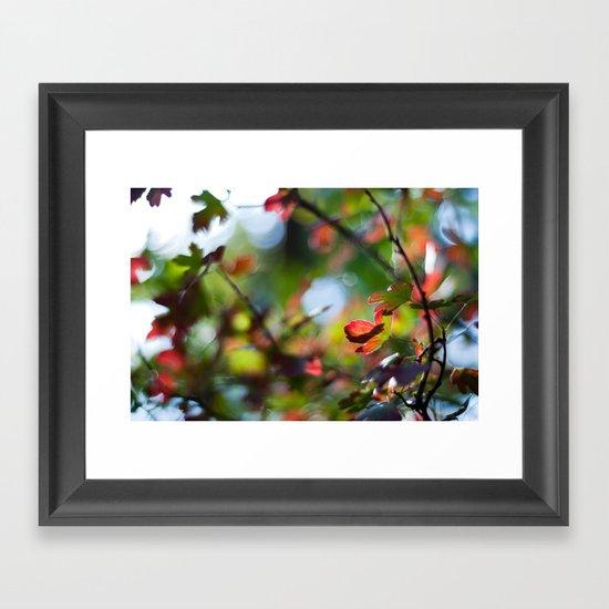 Autumn Rainbow Framed Art Print