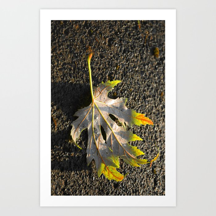 golden maple leaf Art Print