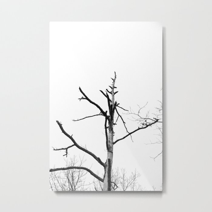 Tree, Courthouse Rock Trail, Red River Gorge, KY. 2015 Metal Print