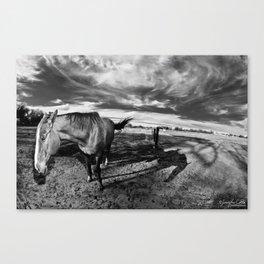 Farm Horse Canvas Print