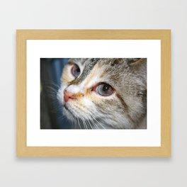 Tofu Framed Art Print