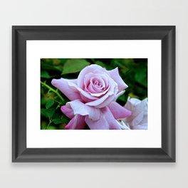 Blushing Bloom Framed Art Print