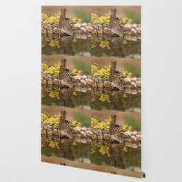 Bird drinking water Wallpaper