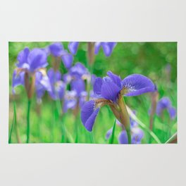 Group of purple irises in spring sunny day Rug