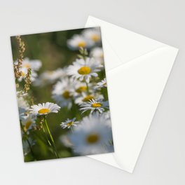 Daisies meadow in the summer Stationery Cards