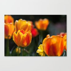 Tulips in the Garden Canvas Print