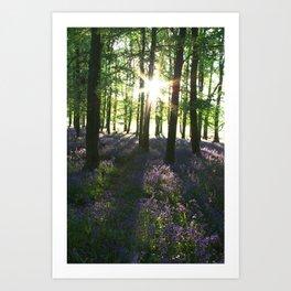 Bluebell Woods at Sunrise Art Print