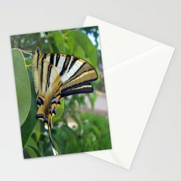 Swallowtail With Partially Closed Wings Side View Stationery Cards