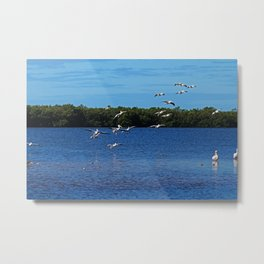 Sanibel Surprises Metal Print