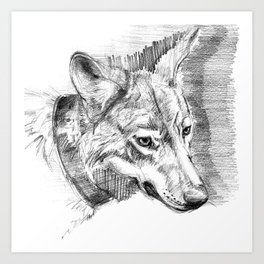 Eastern timber wolf Art Print