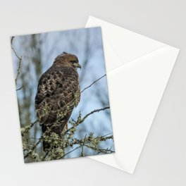 Immature Red-Tailed Hawk Dark Morph Stationery Cards