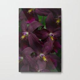 Dark Purple Orchid, Oncidium Metal Print