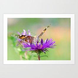 Butterfy 38 Art Print