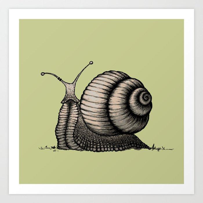 Snail Kunstdrucke