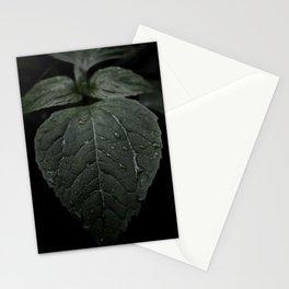 Botanical Still Life Photography Drops On Leaf Stationery Cards