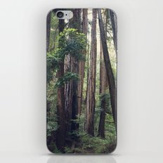 The Redwoods at Muir Woods iPhone & iPod Skin