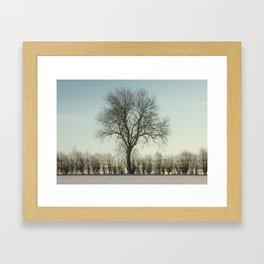 Winter tree in the low sun Framed Art Print