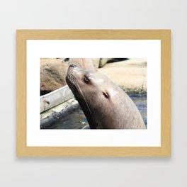 Seal Close Up Framed Art Print