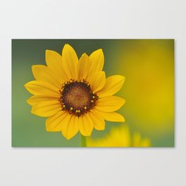 Black-Eyed Susan Wildflower Canvas Print