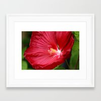 hibiscus Framed Art Prints featuring Hibiscus  by LoRo  Art & Pictures