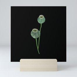 Seasons K Designs Poppy Pod Print on Black Mini Art Print