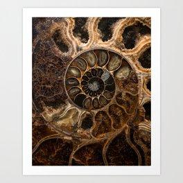 Earth treasures - Fossil in brown tones Art Print