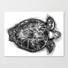 Sea turtle. Black and white. Canvas Print