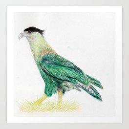 Crested Caracara Art Print