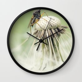 King of the dandelion for a day Wall Clock