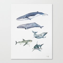 Whales and Sharks Canvas Print