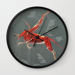 Gryphon Muscle Anatomy Wall Clock
