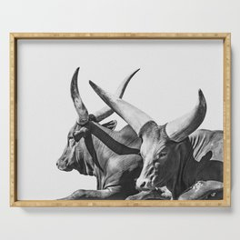 Animal Photography   Ankole-Watusi   Cattle   Bull   Steer   Black and White Serving Tray