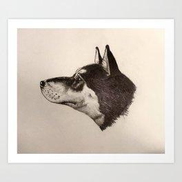Shiba Stare Art Print