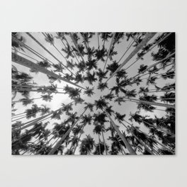 Above Palm Trees (Black and White) Canvas Print