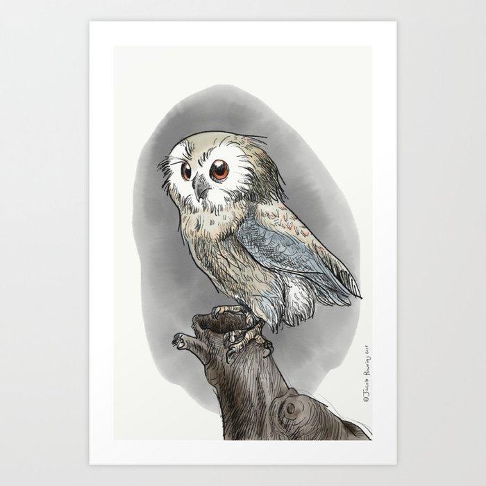 Saw Whet Owl Art Print