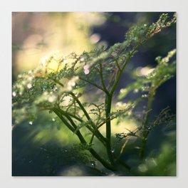 Little Trees Canvas Print
