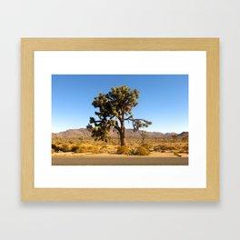 Joshua Tree 003 Framed Art Print